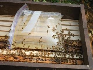 Кормление пчел из фасовочных пакетов